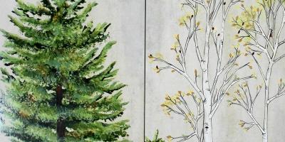 "Stunning Aspen and Pine, 24""x24"""